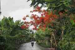 strada nella selva